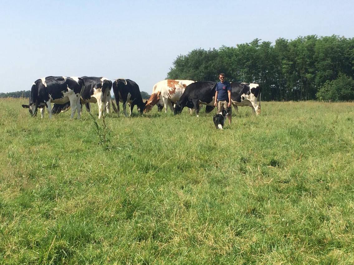 Elevage vaches Amou